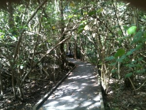 Cape Hillsborough Diversity Boardwalk