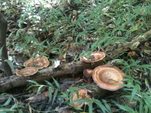 Mushrooms from Cape Hillsborough